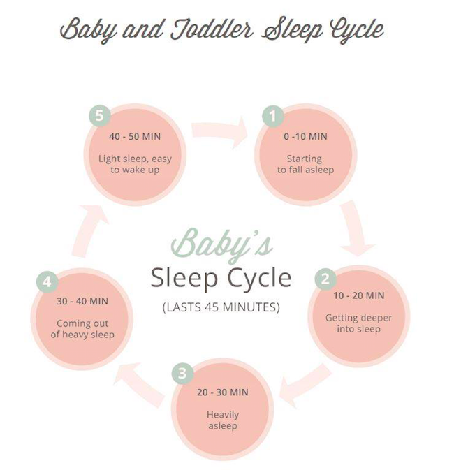 Newborn Baby and Infant Sleep Cycle: Why does my baby wake up every 30 to 45 minutes or take short naps?