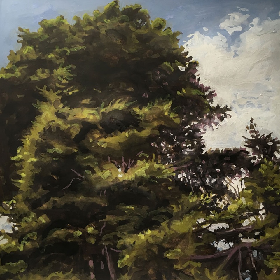 Hat-Hill-Road-trees-2.jpeg