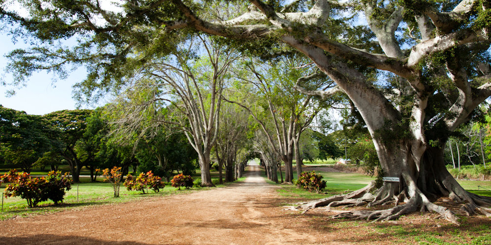 Dillingham-Ranch-Wedding-Waialua-HI-1.jpg