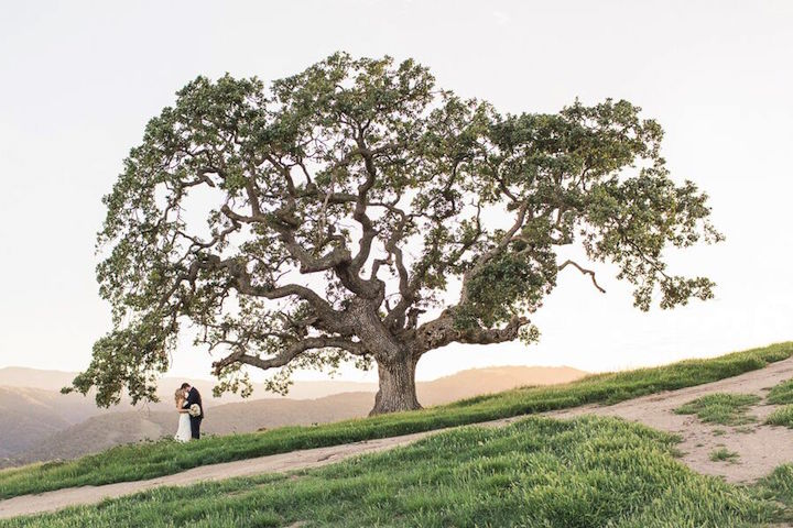 Holman-Ranch-Wedding-CA-CarlieStatsky-14.jpeg