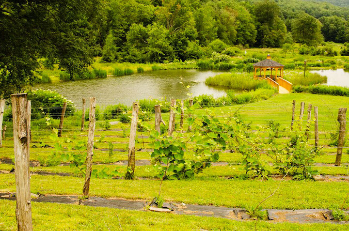 The-Ponds-at-Natural-Gardens-Wedding-East-Meredith-NY-6.jpg