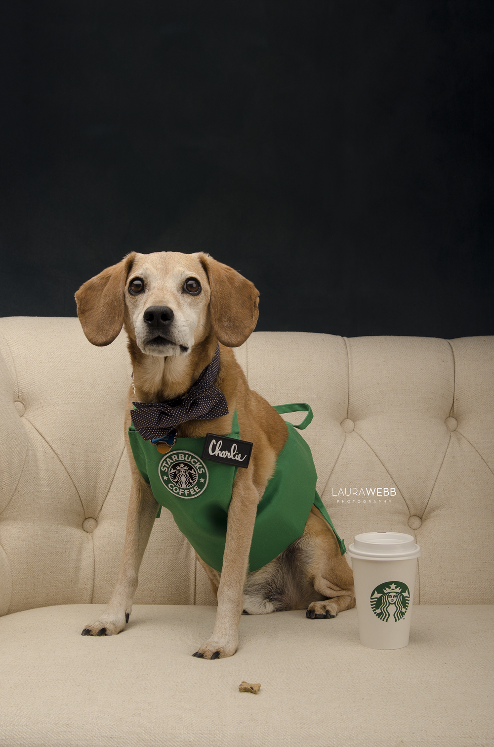 Charlie the Brown Dog-Starbucks Barista Halloween Costume
