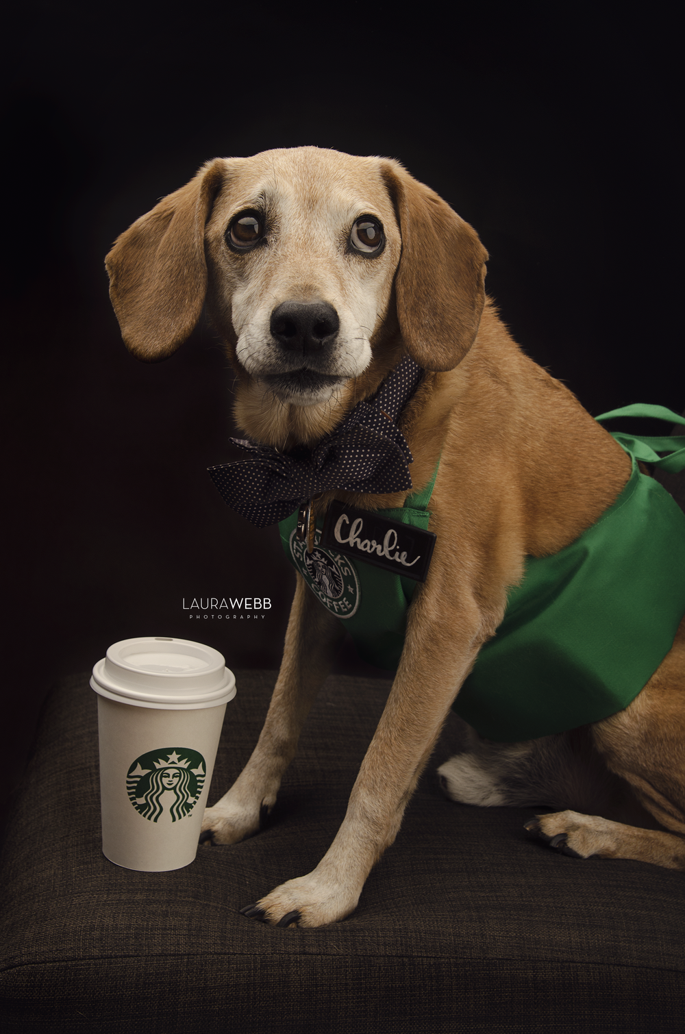 Charlie the Brown Dog-Starbucks Barista Halloween Costume
