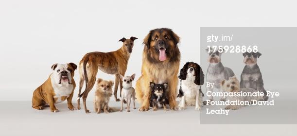 Group Dog Shot