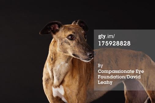 Doggie - racing dog