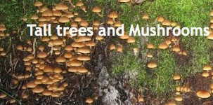Tall Trees and Mushrooms
