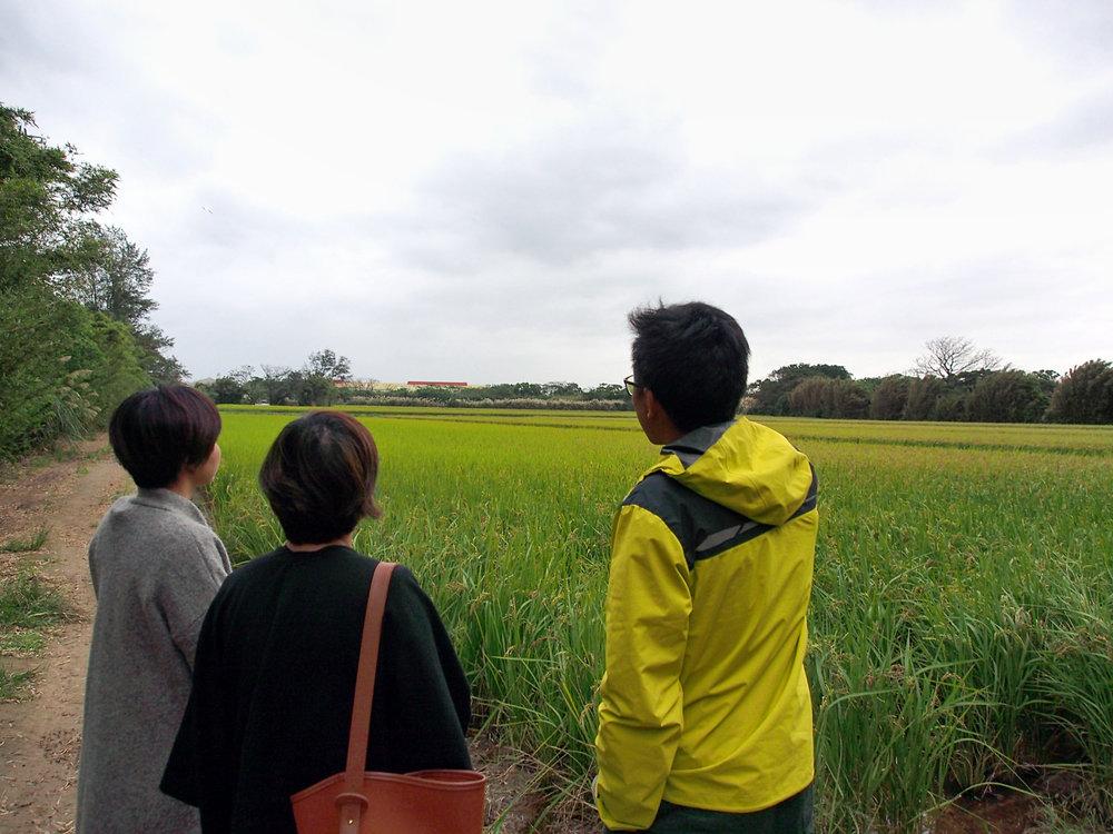 和父親陳燕卿先生一同打拼的陳世賢先生帶著我們去看他們自行保種的田地。為了避免臨園污染及種苗的純粹,育種的田地是個四面都有林地遮蔽的封閉環境。