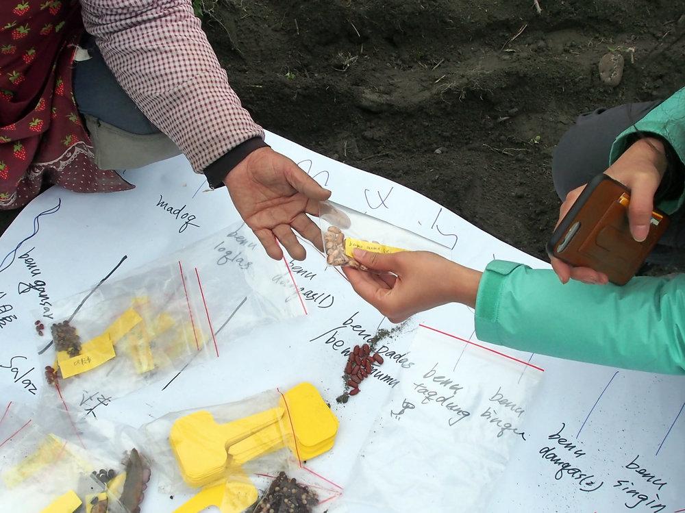小溫跟 Tina 們依據田區規劃開始分配種子。