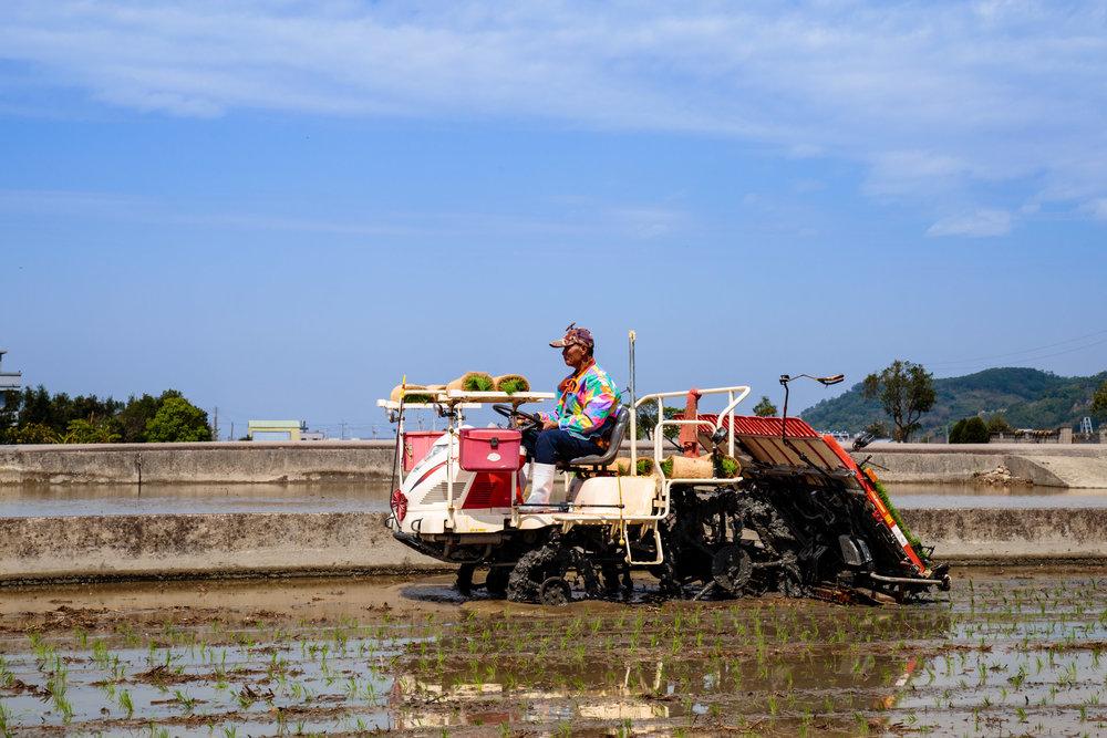 大哥有技巧地安排秧苗的排列跟插秧機的路線。