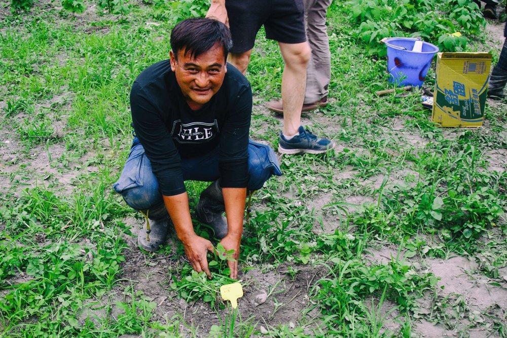 難得變得異常珍貴的紅藜苗,整個保種田只活了六株 QQ