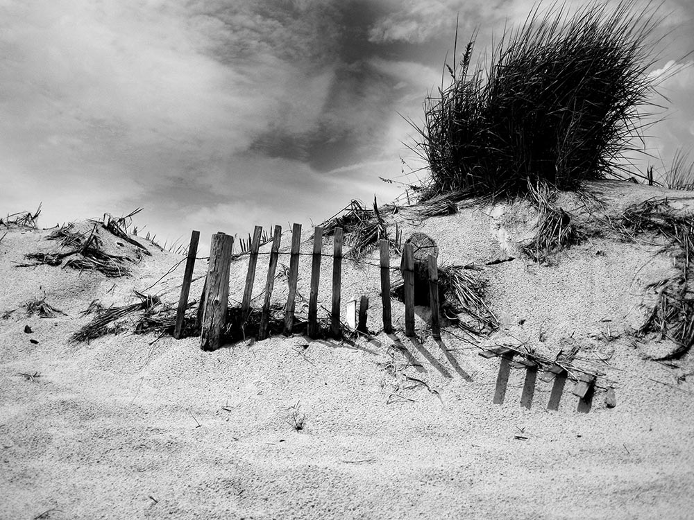 Black and white photograph of a destroyed wooden fence on a sand dune.