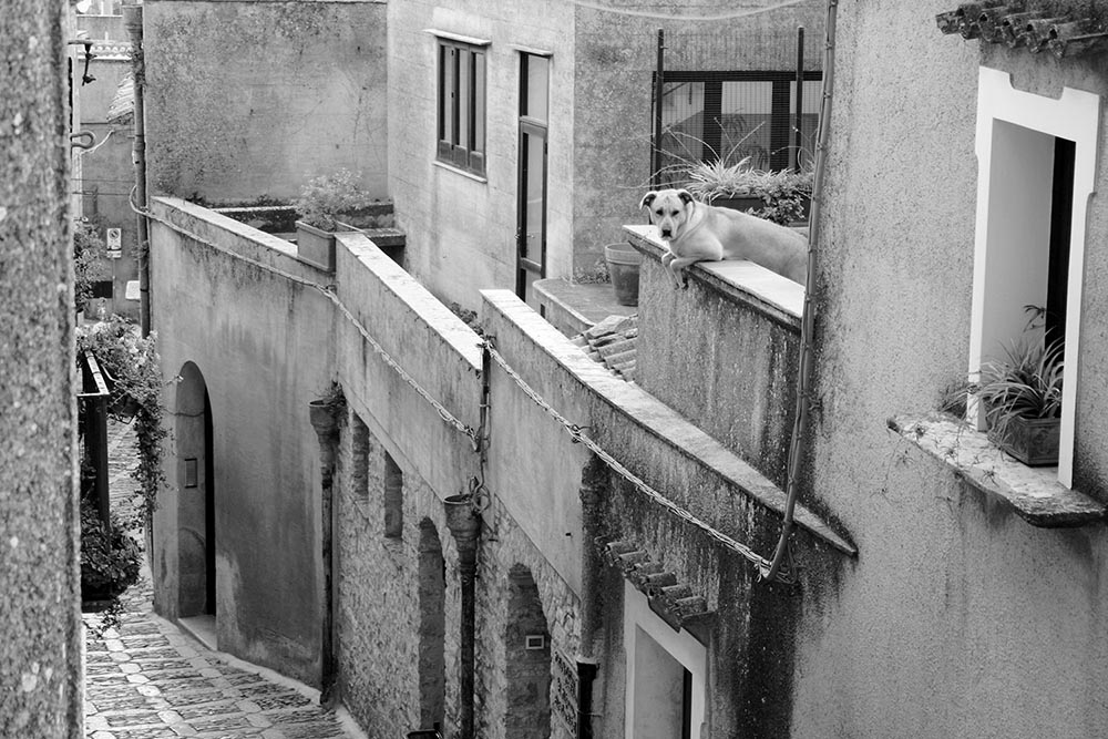 Black and white photo of a dog on a rooftop in Erice, Sicily.