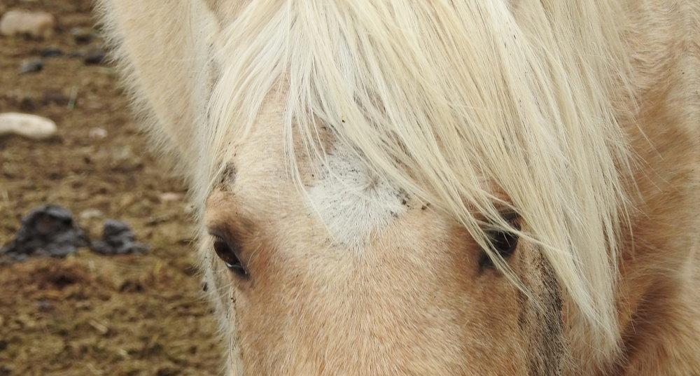 Horse, cropped.jpg