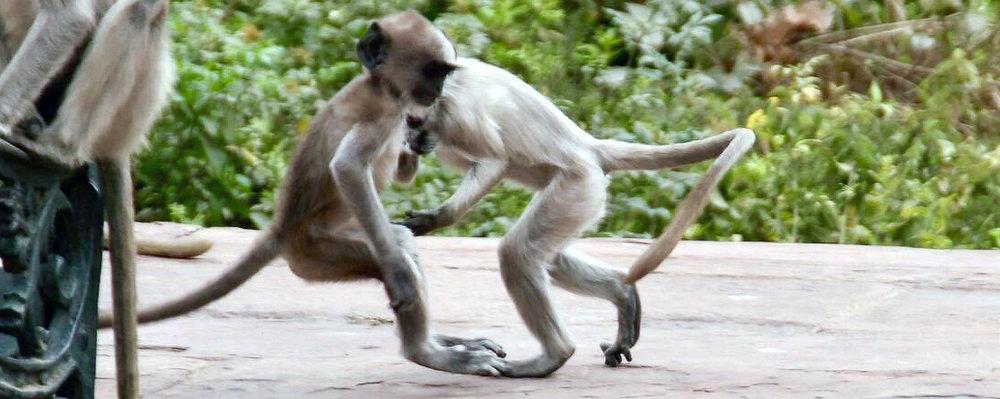 monkey play crop.jpg