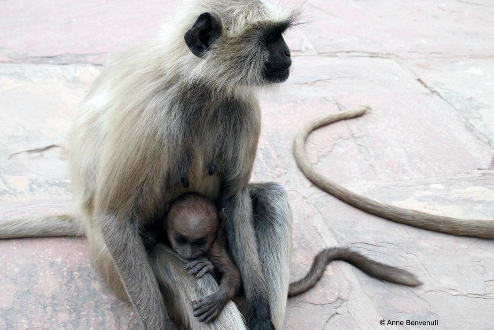 5 mom and baby monkey copy.jpg