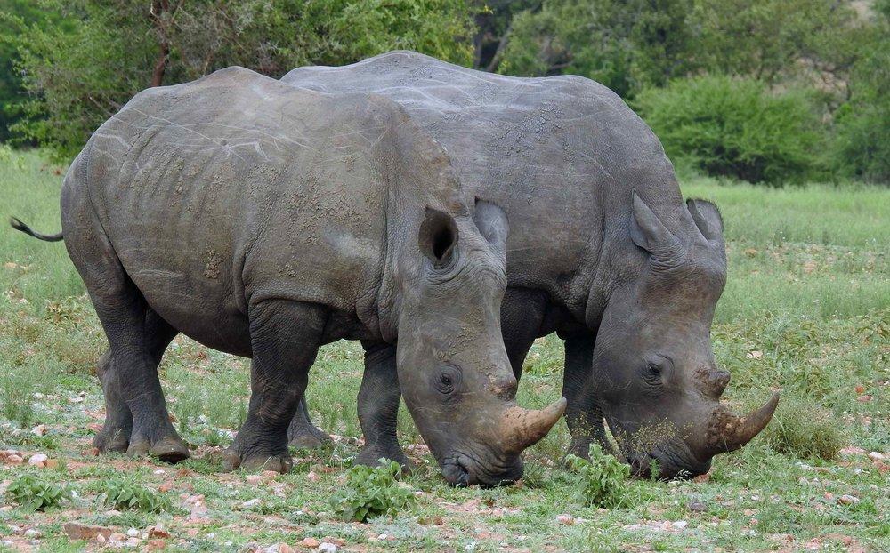 1 rhino friends copy.jpg