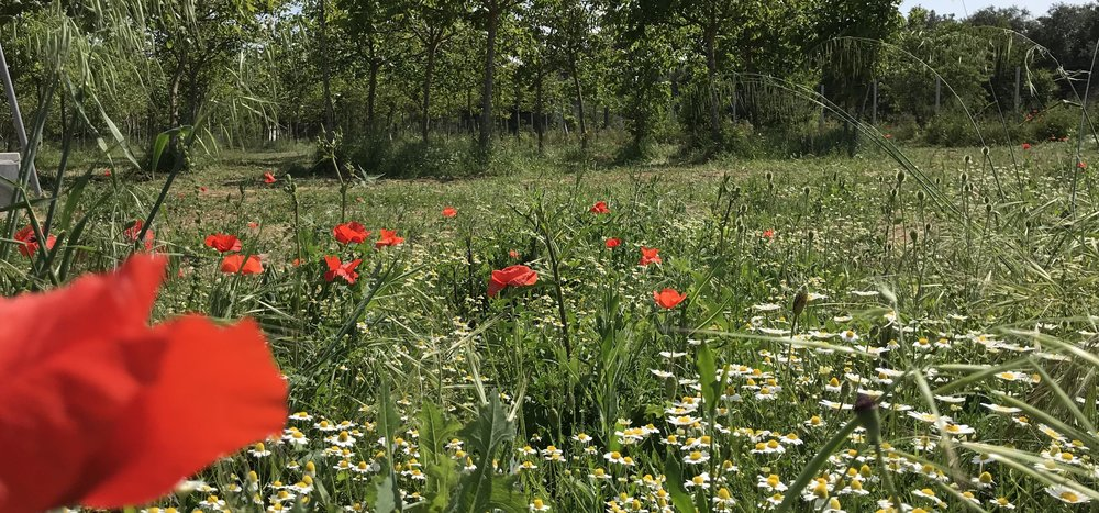 Spring field copy.jpg