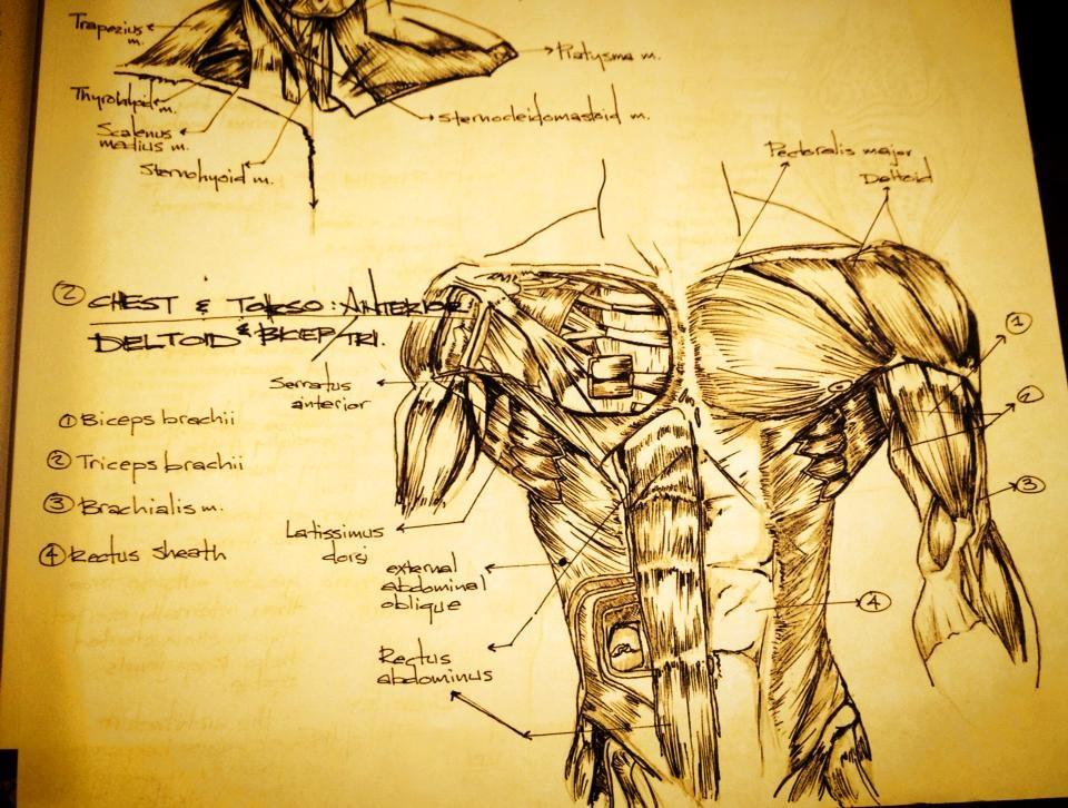 anatomy5.JPG