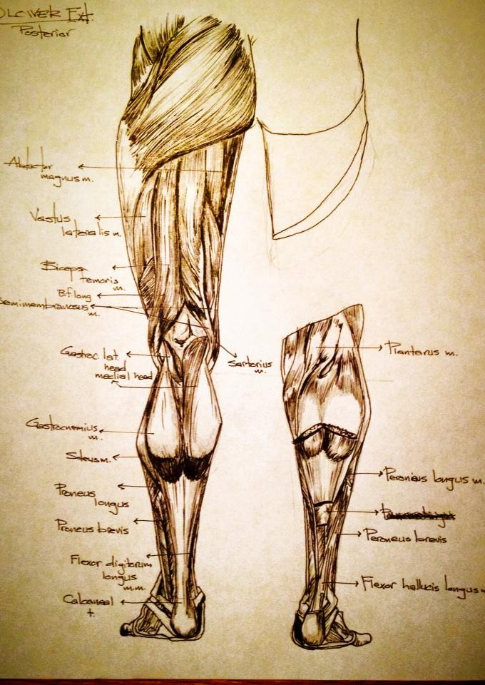 anatomy7.JPG