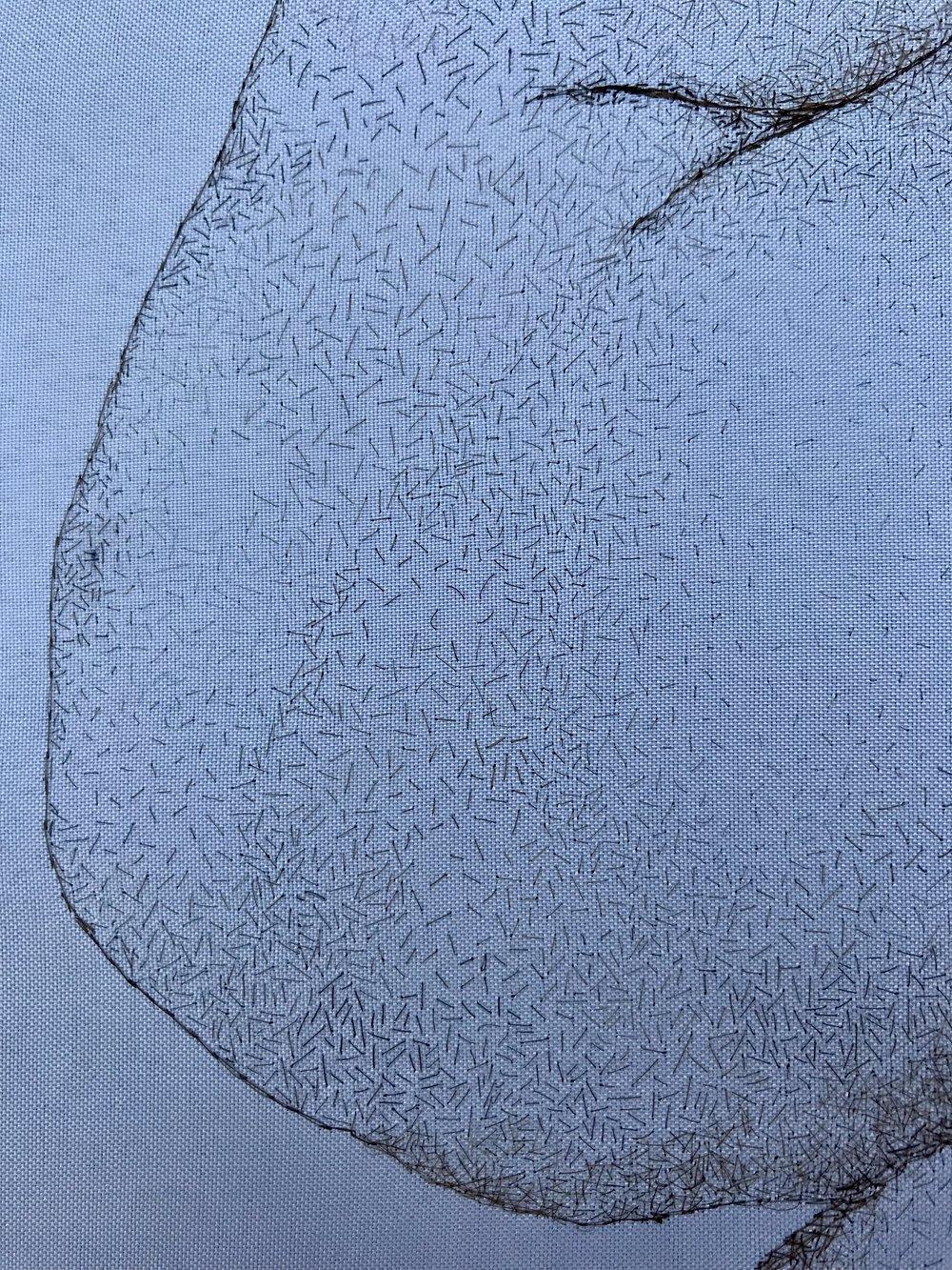 Hirsute Detail 1.JPG
