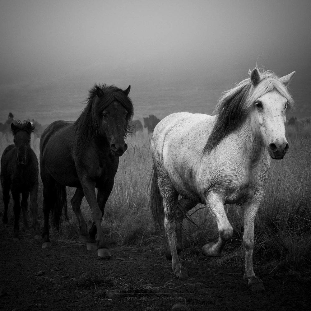 Black and White_IMG_2246.jpg