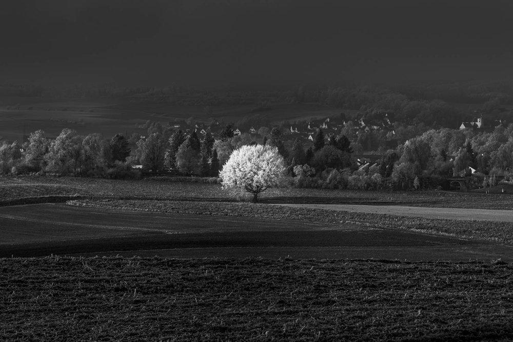 Black and White_IMG_9716.jpg
