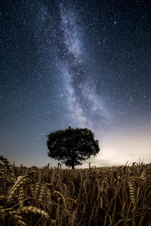 GERMANY_Tree composite dahme.jpg