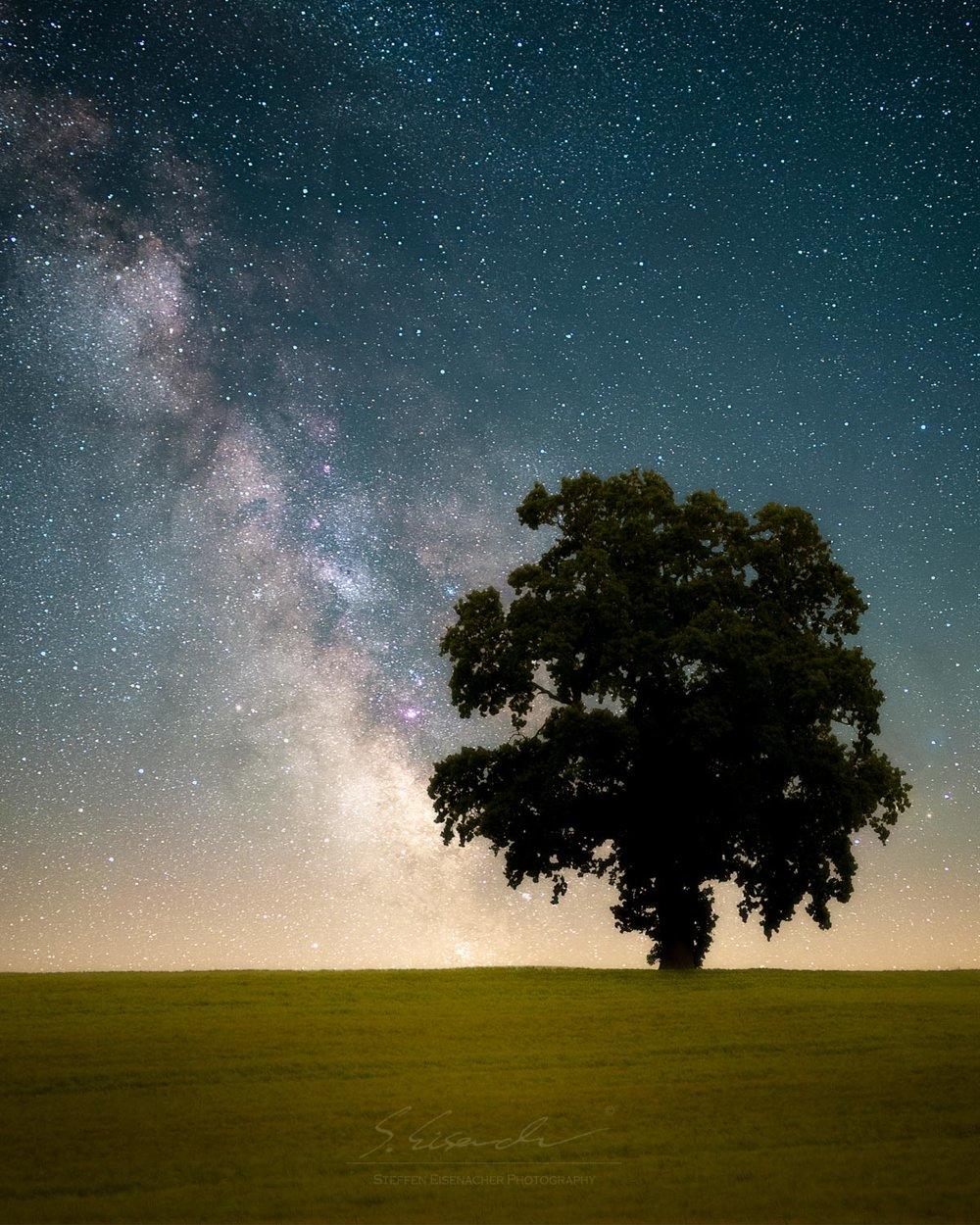 GERMANY_tree compsite-Edit orton.jpg