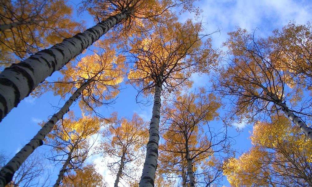 fall-10.jpg