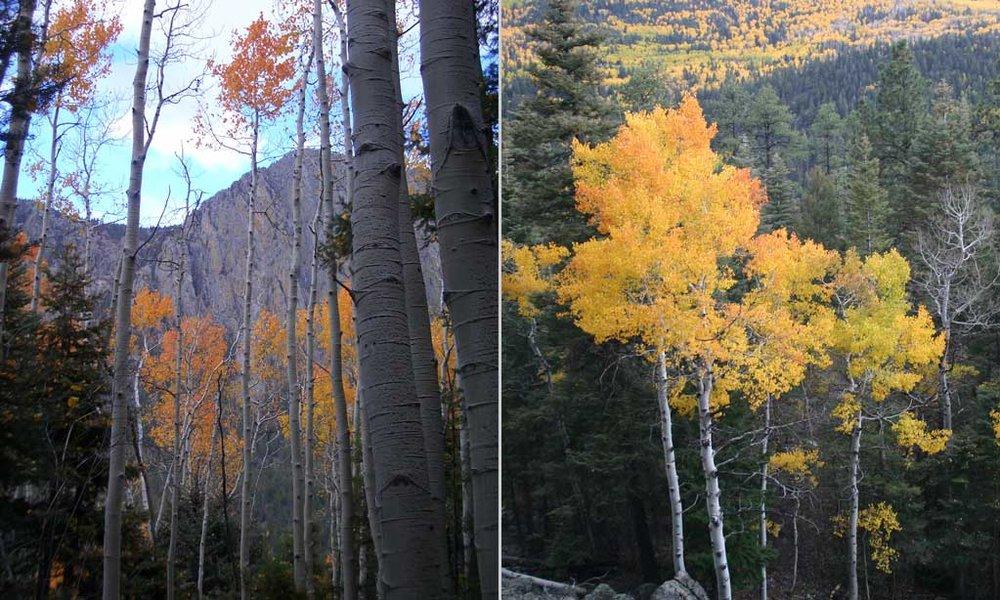 fall-14.jpg