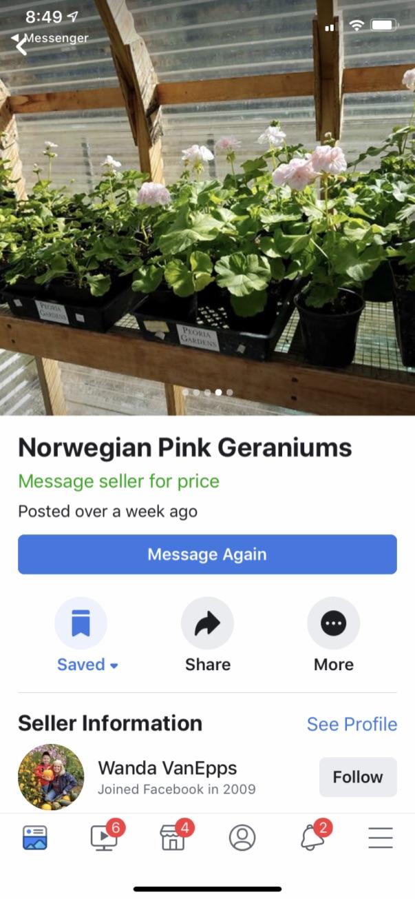 geranium_post