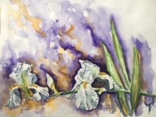 White Iris.jpg