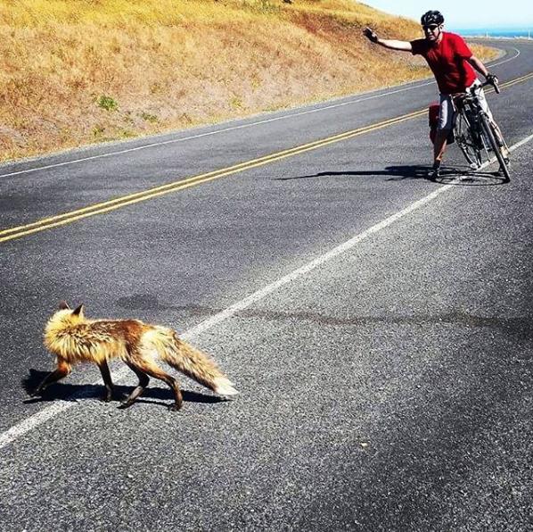 Arash greets a fox while cycling. Instagram: @arashkhoddamy