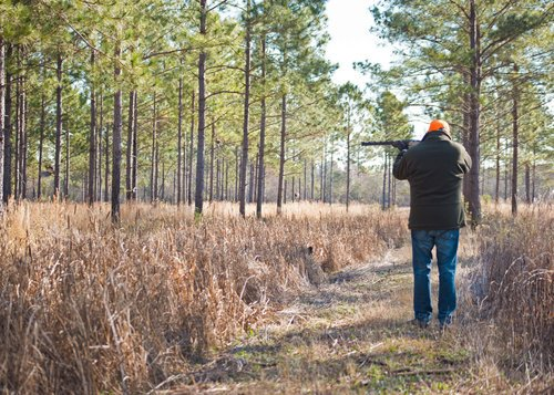 Shadow-Oak-Plantation-Hunter-shooting-quail.jpg