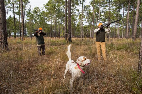 Shadow-Oak-Plantation-Two-Gunners-English-setter.jpg