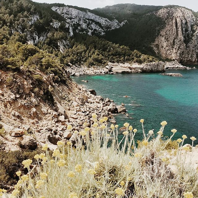 Gracias Ibiza ! 🌊🌞🌿🙌🏻 . . . . . #ibiza #naturelover #sea #sun #outdoorlife #outdoorgirl #wildlife #wildcats #naturephotography #seaside #ibizasecrets #wildlife #simplelife