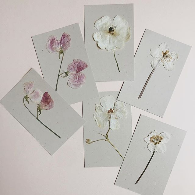 Petites attentions 🌸 . . . . . #herbier #herbarium #stationnery #diy #papeterie #flowers #weddingidea #atelierprairies #weddinginspo #pressedflowers #pressedflower #fleurspressees