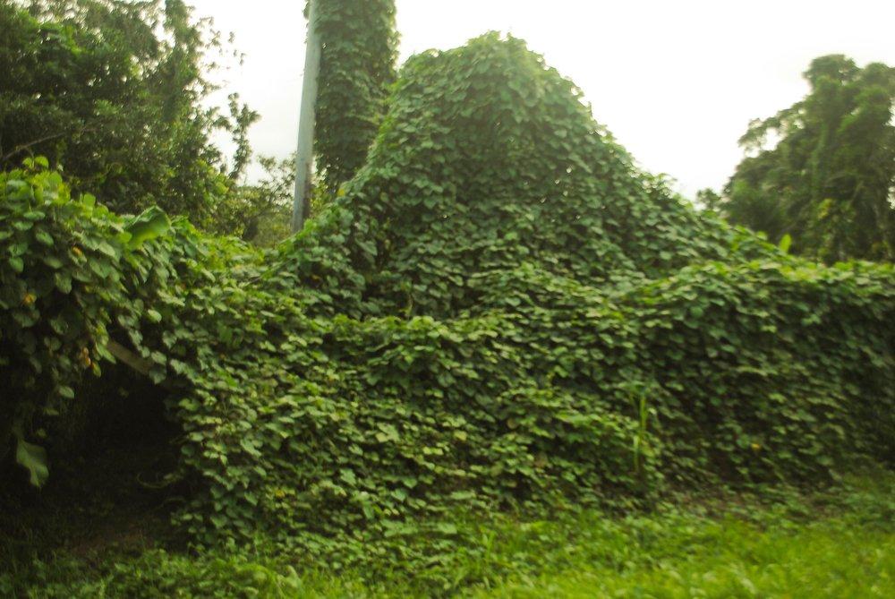 Magic Garden 2.jpg
