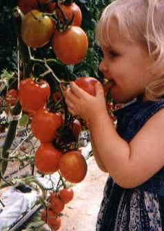 "The official tomato tester says ""It's good!"""