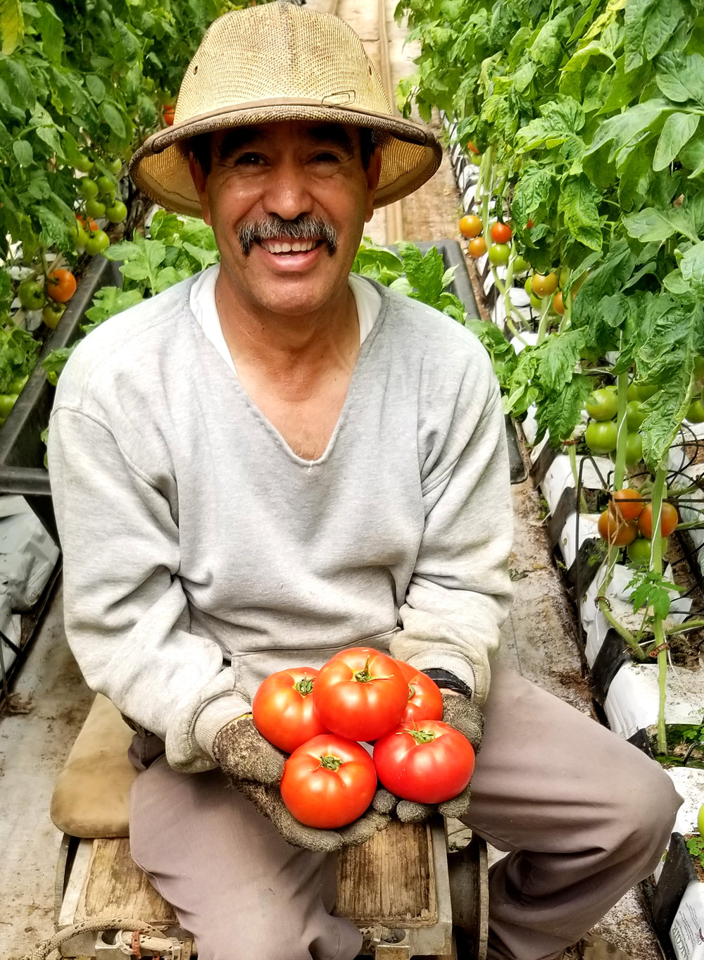 Jose is smiling because he was just handed some ripe and delicious Beylik tomatoes. Jose has worked at Beylik Farms for 35 years. He is the farm's Foreman and an expert at growing tomatoes.