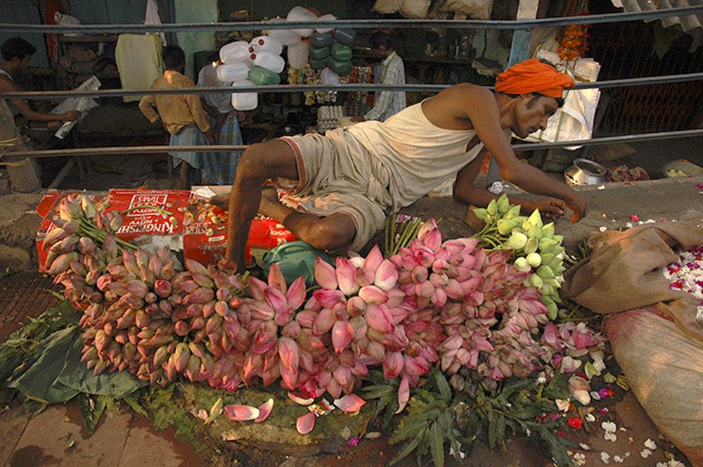 lotusseller_india.jpg