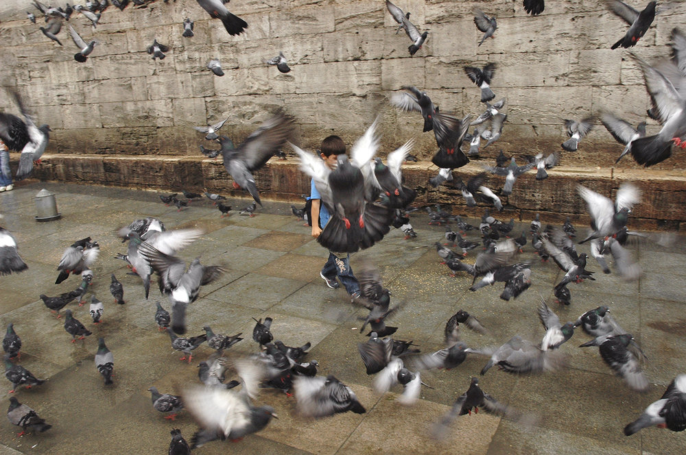 pigeonboy_istanbul.jpg