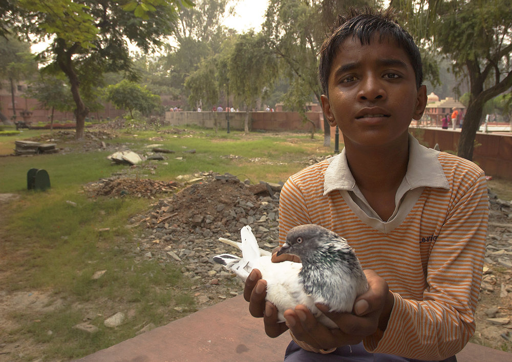 pigeonboy_india.jpg