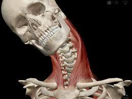 scm skeleton.jpg