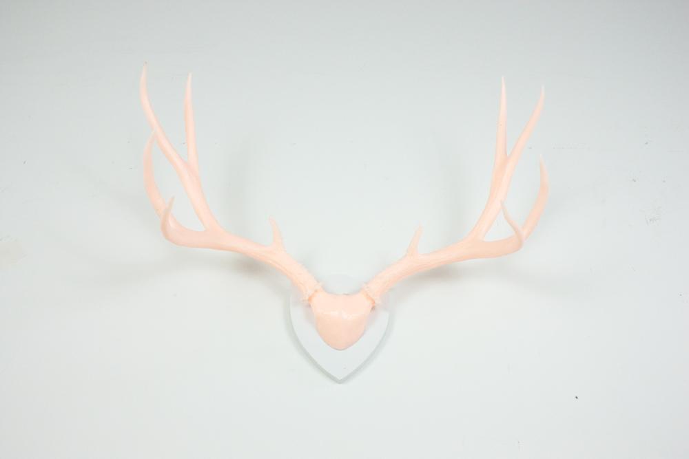 antlers-9302.jpg