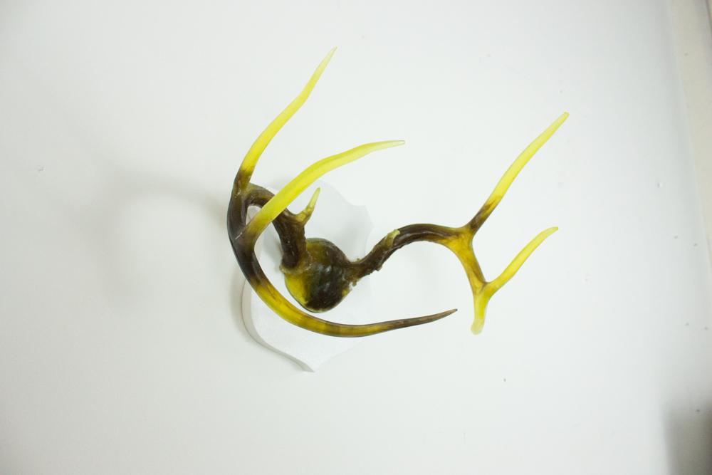 antlers-9331.jpg