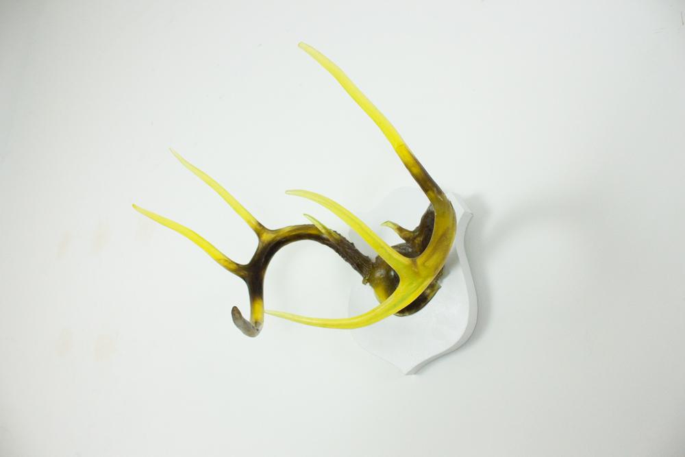 antlers-9332.jpg