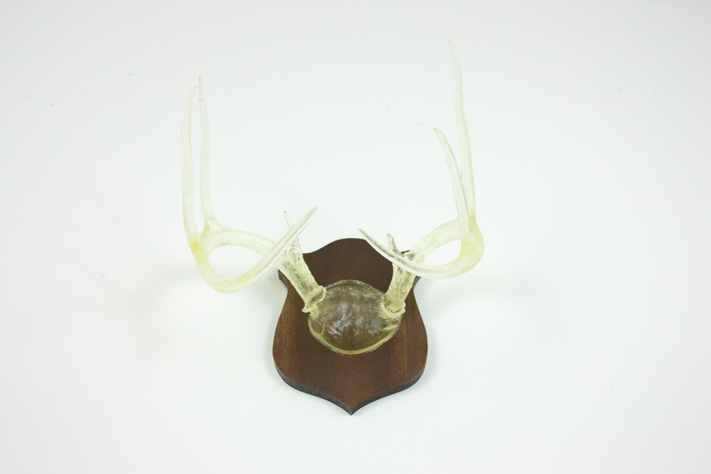 antlers-9344.jpg