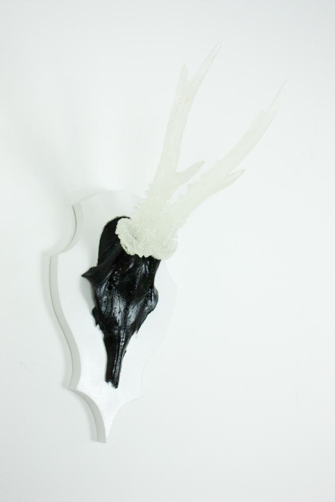 antlers-9377.jpg