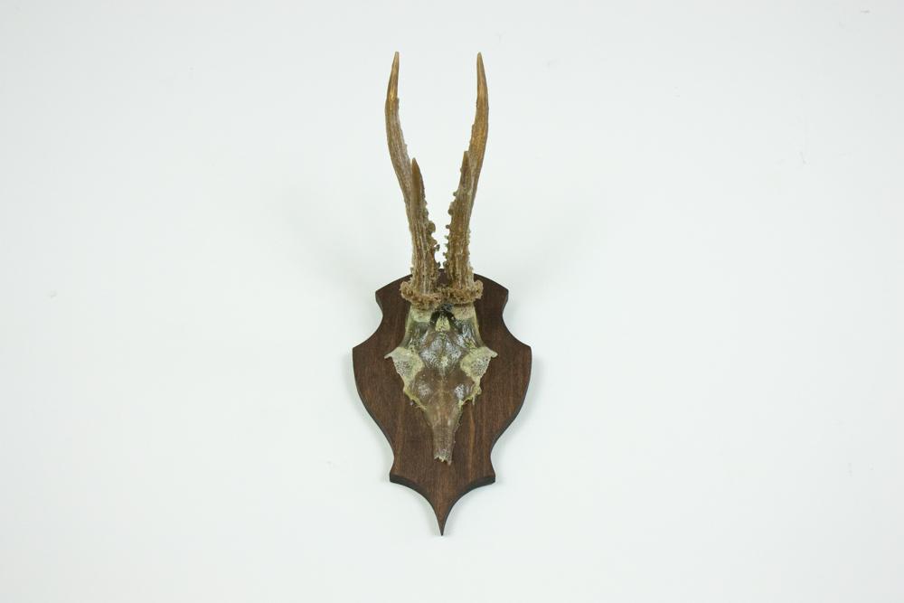 antlers-9383.jpg